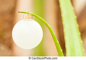 vera, ornamento, natal, aloe