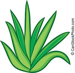 vera, plante, aloès