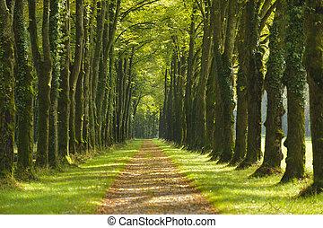 verano, árbol, callejón, senda