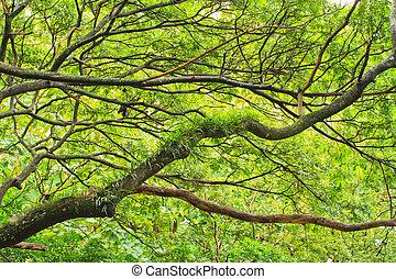 verano, árboles