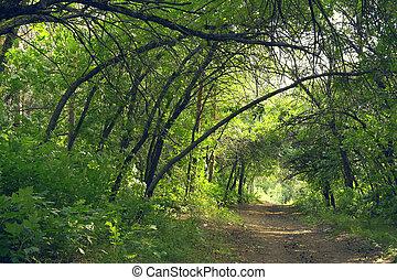 verano, bosque, manera