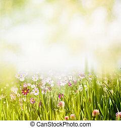 verano, bosque, resumen, natural, fondos