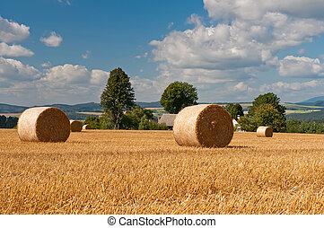verano, campo