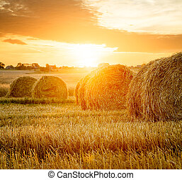 verano, campo, granja, heno, balas, ocaso