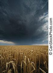 verano, campo, heno, españa, campo, tormenta
