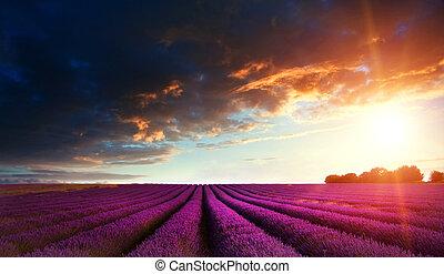 verano, campo lavanda, maravilloso, ocaso, paisaje