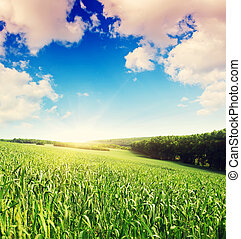 verano, campo, y, luz del sol, en, azul, sky., nublado,...