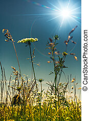 verano, en, el, pradera, resumen, natural, fondos