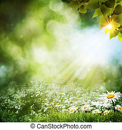 verano, Extracto, flores, fondos, margarita