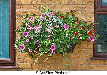 verano, flores, pared, lecho, basket., montado