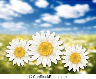 verano, flores, plano de fondo