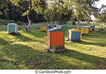 verano, grupo, jardín, colorido, colmena, granja, de madera