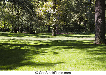 verano, hermoso, parque, con, frondoso, árboles
