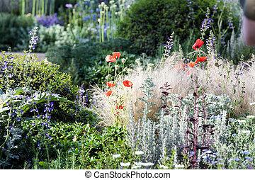 verano, jardín, amapolas