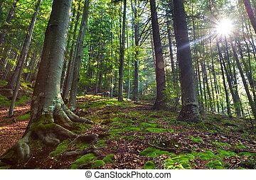 verano, mañana, en, místico, bosque