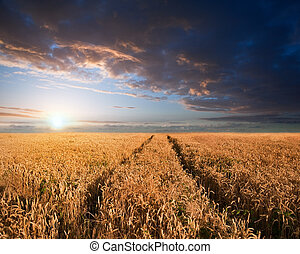 verano, maravilloso, ocaso, wheatfield, paisaje