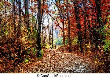 verano, minnesota, encantado, indio, sendero bosque