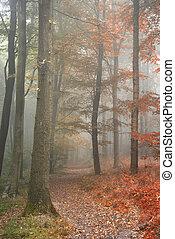 verano, mostrar, concepto, imagen, uno, otoño, estaciones, bosque, otoño, cambiar, paisaje