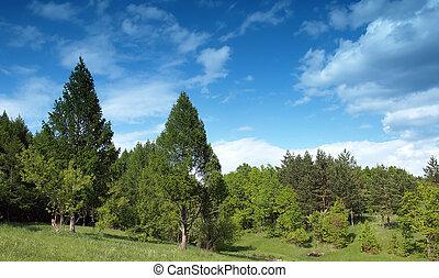 verano, paisaje, con, árboles