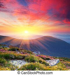 verano, paisaje, en, montañas, con, el, sol