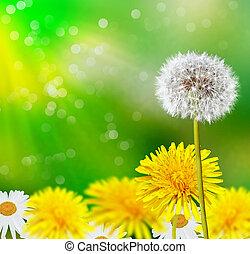 verano, paisaje., flowers.