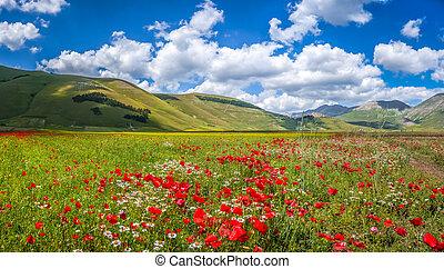 verano, paisaje, Italia,  Umbria,  Grande,  piano