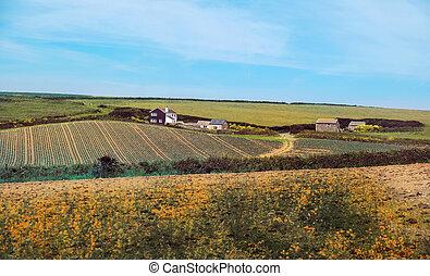 verano, paisaje, Reino Unido,  Cornwall