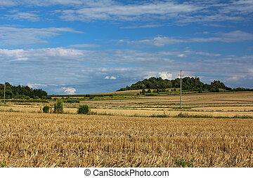 verano, paisaje rural