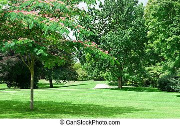verano, parque, con, hermoso, verde, céspedes
