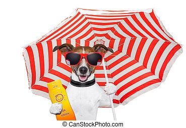 verano, perro