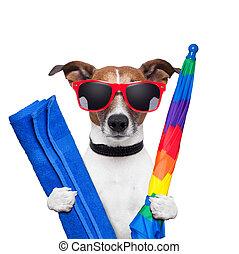 verano, perro, vacaciones