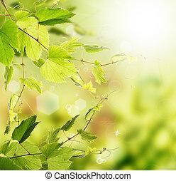 verano, Plano de fondo, naturaleza