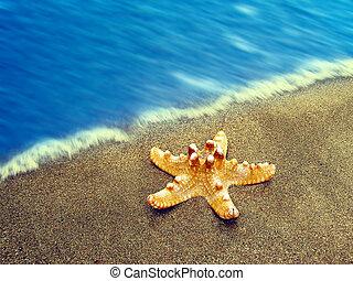 verano, playa, Estrellas de mar