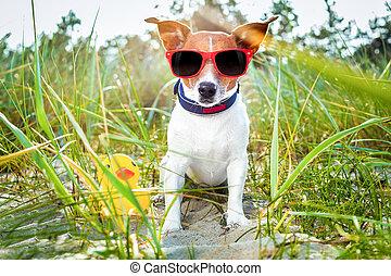 verano, playa, perro