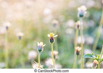 verano, pradera, con, flores salvajes