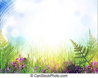 verano, pradera, con, viola, flores
