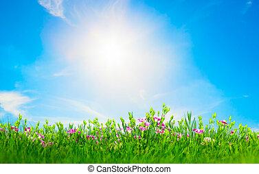 verano, pradera, flores, en, hierba verde, soleado, cielo azul