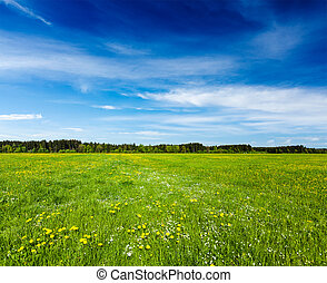 verano, pradera