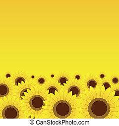 verano, pradera, girasoles, plano de fondo, diseño, su