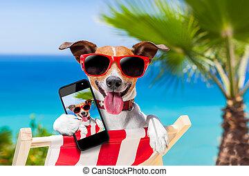 verano, selfie, perro