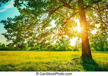 verano, soleado, bosque, árboles, y, verde, grass., naturaleza, madera, luz del sol