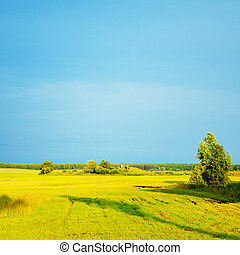 verano, tarde, paisaje