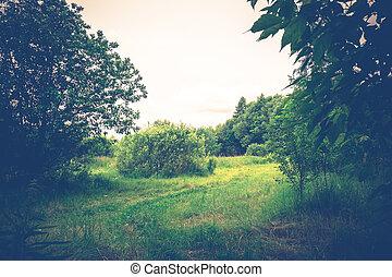 verano, verde, retro, árboles