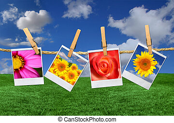 verbazend, bloem, polaroid, beelden, hangend, een, koord,...