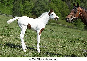 verbazend, foal, met, merrie, op, pasturage