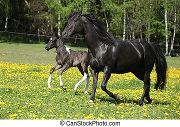 verbazend, merrie, met, foal, rennende