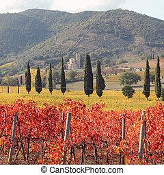 verbazend, tuscan, wijngaarden, in, herfstachtig, kleuren,...