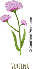 Verbena flower icon. Cartoon of verbena flower vector icon for web design isolated on white background