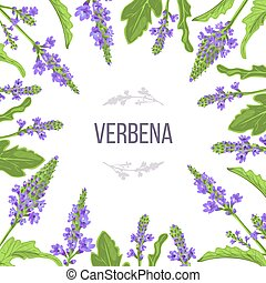 Verbena flowers and leaves card template with copy space. branch boxing. Verbenaceae medicinal herb vector Illustration. . For prints, posters, flyer, flier, purple, textile tags labels, perfumery