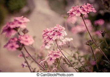 Verbena flowers on bokeh background